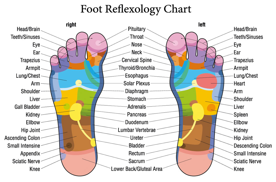 health-alternative-foot-diagram, Human Body
